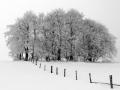 2009-das-werden-im-winter.jpg